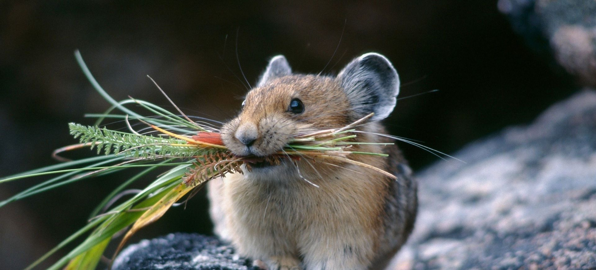 Rodent care
